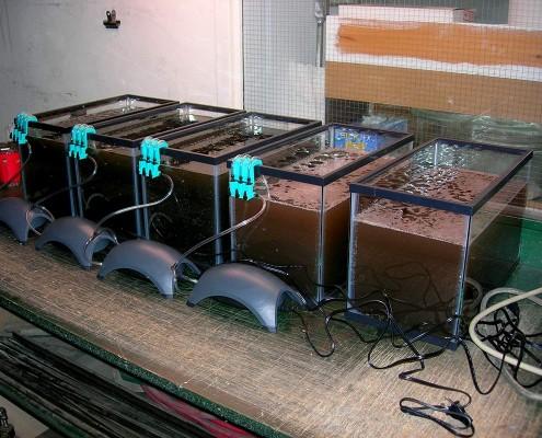 Soil sample trials